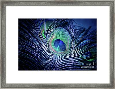 Peacock Feather Blush Framed Print