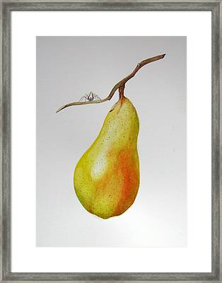 Framed Print featuring the painting Pear With Spider by Margit Sampogna