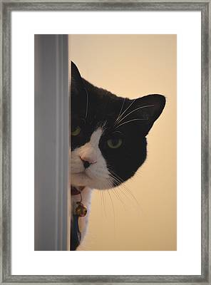 Peek-a-boo Framed Print by James E Weaver