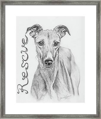 Petunia Framed Print by Teresa Vecere