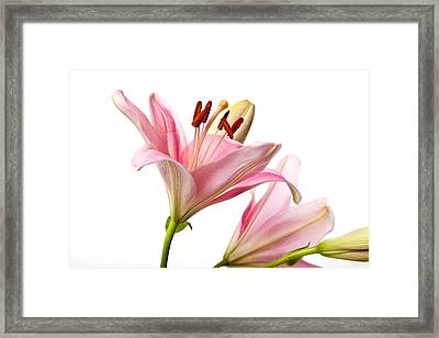 Pink Lilies 03 Framed Print by Nailia Schwarz