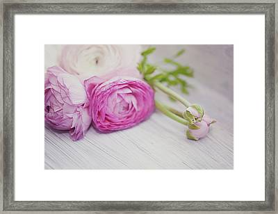 Pink Ranunculus Flowers On White Wooden Shelf Framed Print by Isabelle Lafrance Photography