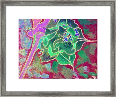 Pomegranate Flower Framed Print by Loretta Nash