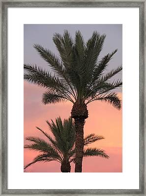 Precious Palm Framed Print