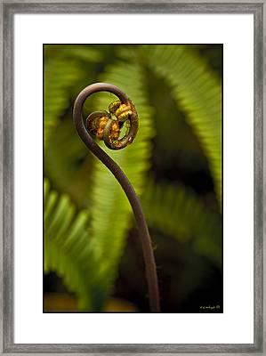 Pua A Ehu Ehu No 5 Framed Print by Daniel G Walczyk