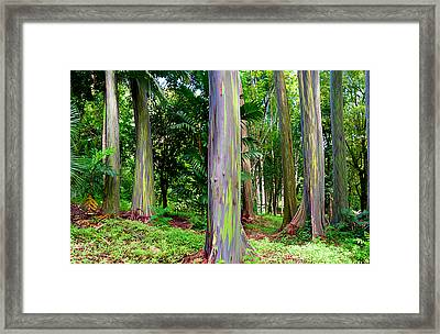 Rainbow Eucalyptus Framed Print by Monica and Michael Sweet