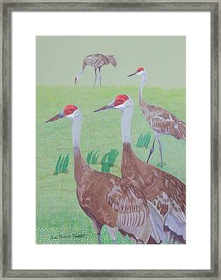 Red Heads Framed Print