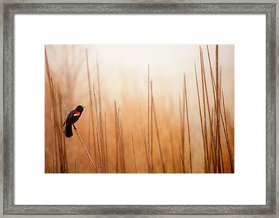 Red-winged Black Bird In Song Framed Print by Michael Lawrence Photography