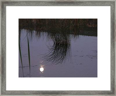 Reed Reflections Framed Print