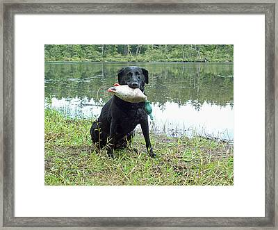 Retrieve Training At Island Lake Framed Print by Pamela Patch