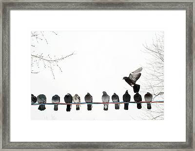 Row Of Pigeons On Wire Framed Print
