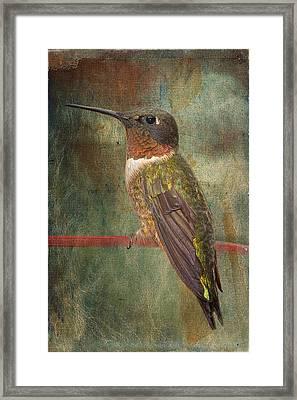 Ruby Throated Hummingbird Framed Print