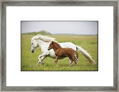 Running Horses.... Framed Print