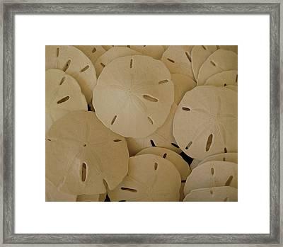 Sand Dollars Framed Print