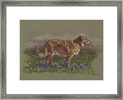 Sasha In The Bluebonnets - Leonberger Framed Print
