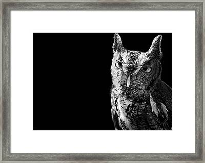 Screech Owl Framed Print by Malcolm MacGregor