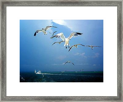 Seagulls  Framed Print by Brittany H