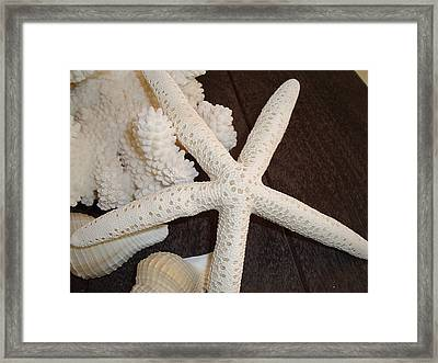 She Sells Seashells II Framed Print