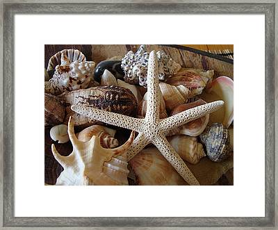 She Sells Seashells Framed Print
