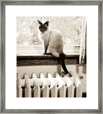 Siamese Cat At Window Framed Print