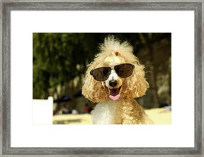 Smiling Poodle Wearing Sunglasses On Beach Framed Print