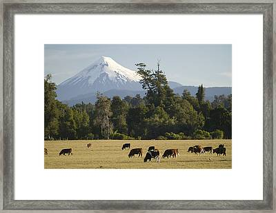 Snow-capped Osorno Volcano Framed Print by Abraham Nowitz