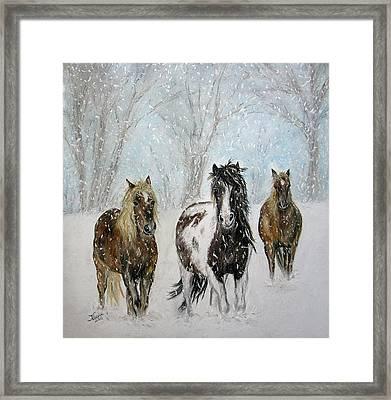 Snow Horses Framed Print by Teresa Vecere