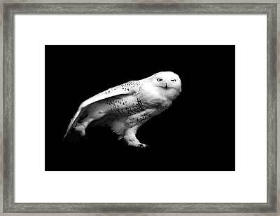 Snowy Owl Framed Print by Malcolm MacGregor