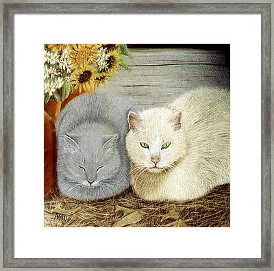 Soft And Fluffy Framed Print by Jan Amiss