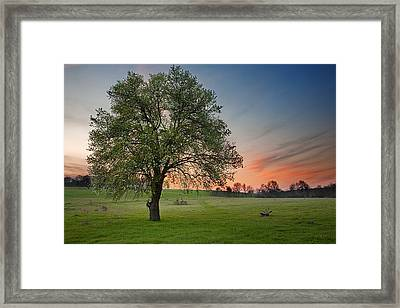 Spring Is Here Framed Print by Evgeni Dinev