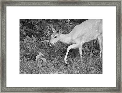 Steppin Out Bw Framed Print by Karol Livote