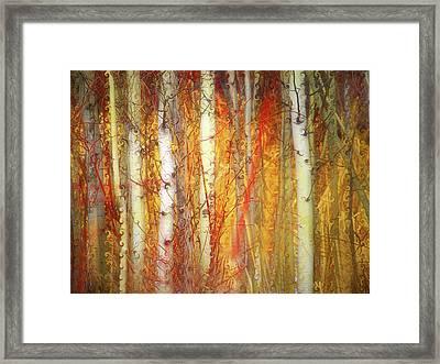 Strange Forest Framed Print by Tara Turner