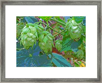 Sun Dappled Hops Vine Seed Cones Framed Print