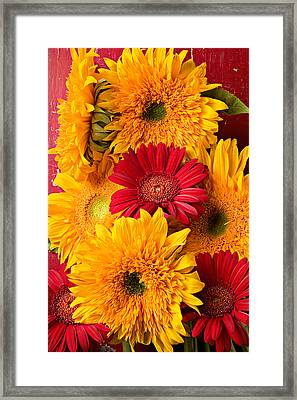Sunflowers And Red Mums Framed Print
