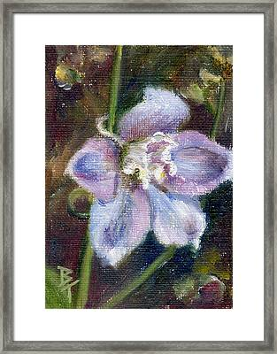 Sweet Bloom Aceo Framed Print by Brenda Thour