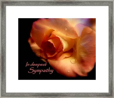 Sympathy Rose Framed Print by Cindy Wright