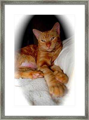 Framed Print featuring the photograph Tabby by The Art of Alice Terrill