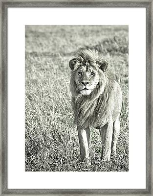 The King Stands Tall Framed Print by Darcy Michaelchuk