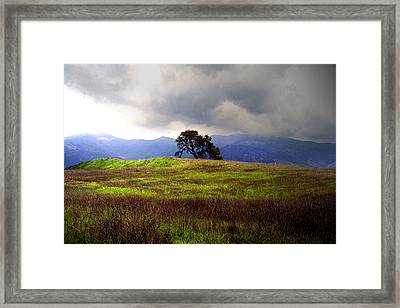 The Last Oak Framed Print
