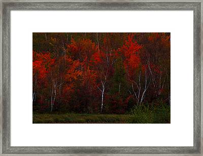 The Reds Have It Framed Print by Marjorie Imbeau