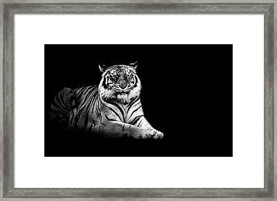 Tiger Framed Print by Malcolm MacGregor