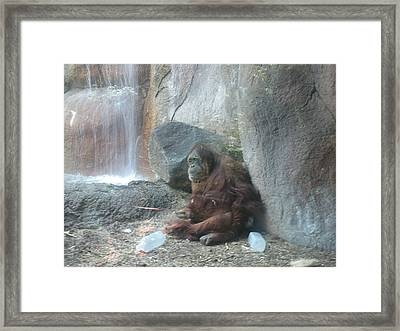 Too Much To Drink Framed Print