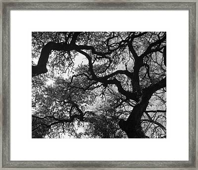 Tree Gazing Framed Print by Lindsey Orlando