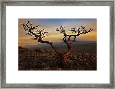 Tree On Top Of Hill Of  Yorkshire Dales Framed Print