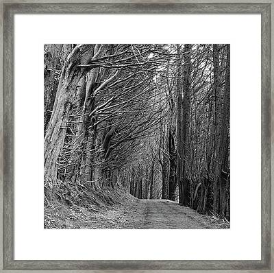 Trees Along Sandymount Track, New Zealand Framed Print