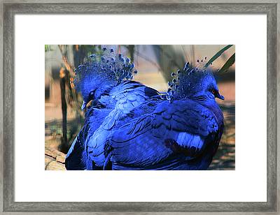 Two Blue Framed Print
