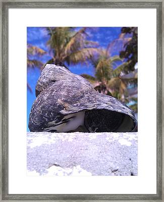 .two. Framed Print by C Azzolini
