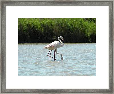 Two Headed Framed Print by Manuela Constantin