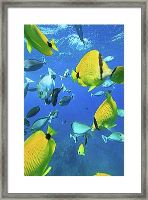 Unicorn Fish Framed Print