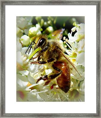 Up Close And Personal Honey Bee Framed Print by Cindy Wright